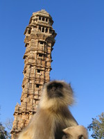 041219161430_black_faced_langur_and_tower_of_victory