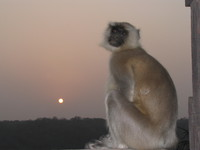 041222170920_crying_monkey_at_rathamhbore
