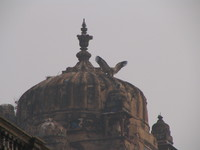 050103102058_vulture_on_the_dome_of_jehangir_mahal