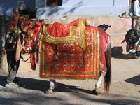 041205203908_indian_wedding_horse