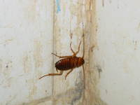 014_cockroach_in_my_hotel