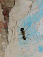 021_ant_in_my_hotel