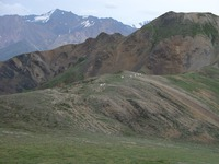 07210059_dall_sheep_encounter