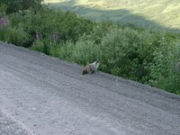 07190091_mammoth_squirrel