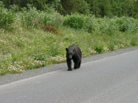 07270010_bear_sighting