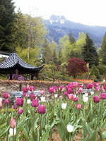 021_the_chinese_style_garden