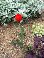 022_a_single_living_red_flower