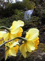 024_yellow_flower_and_the_fall