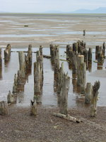 06160010_some_ancient_wooden_stakes