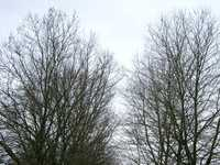 03090002_trees_in_the_same_area