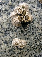07020012_colony_of_shells