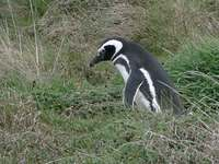 penguin_colony