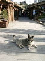 11150011_doggy_guarding_the_shopping_center