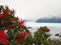 11160012_flowers_and_glacier