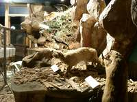 11290060_small_museum_inside_the_zoo