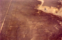 008_nazca_lines_-_humming_bird