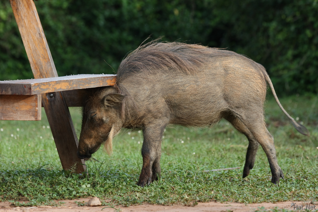 warthog bum his head on the bench