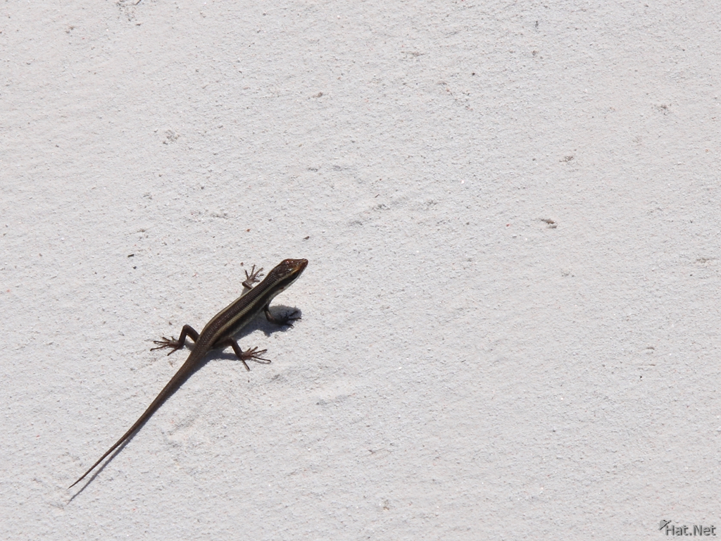 view--gecko on zanzibar