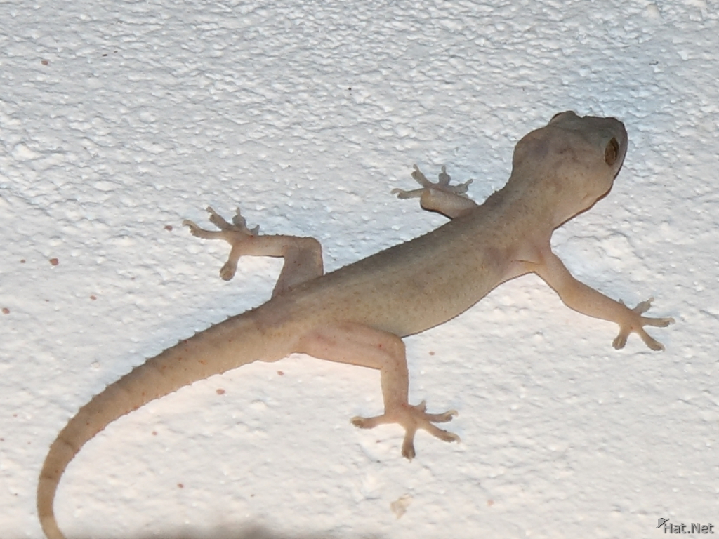 gecko in diani beach