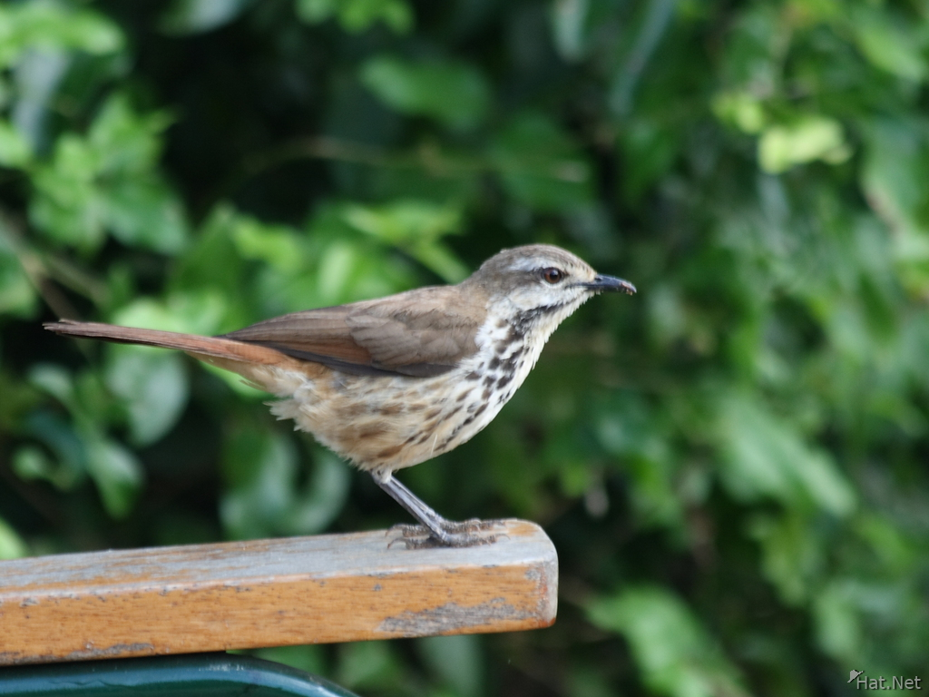 view--sparrow on chair arm