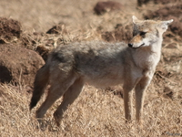 071004091940_view--golden_jackal
