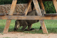 what hides under the picnic table Murchison Falls, East Africa, Uganda, Africa