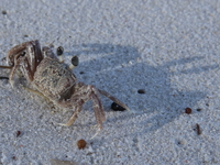 071009162638_view--sand_crab