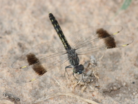 dragon_flies
