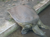 tortoises_of_kenya