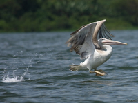 070923111416_view--pelican_take_off