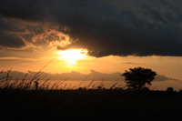 sunset near river nile Murchison Falls, East Africa, Uganda, Africa
