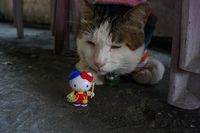 Hello Kitty in houtong cat village 暖暖區,  New Taipei City,  Taiwan, Asia
