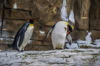Penguins in Taipei Zoo Wenshan District,  Taipei City,  Taiwan, Asia