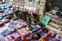 houtong cat village 暖暖區,  New Taipei City,  Taiwan, Asia