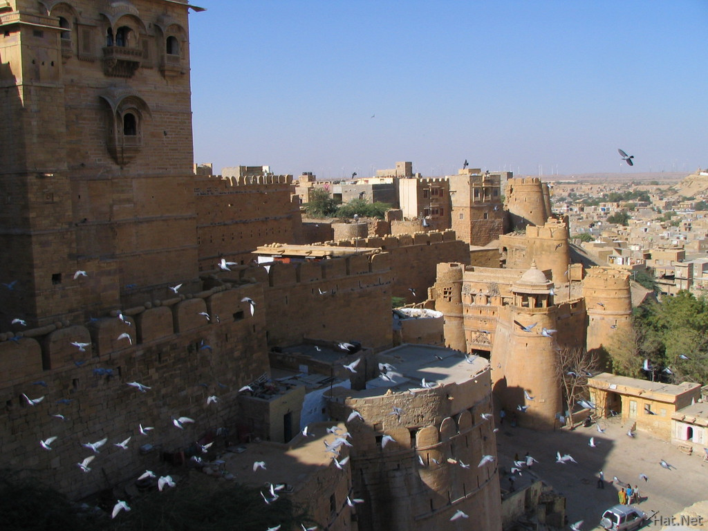 flying pigeons in jaisalmer