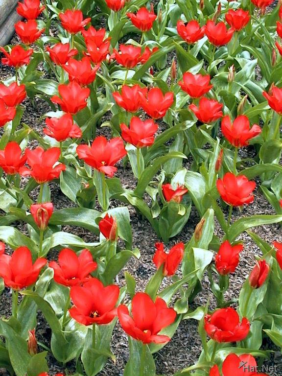 Red Flowers Minter Gardens 100 Thousand Photos