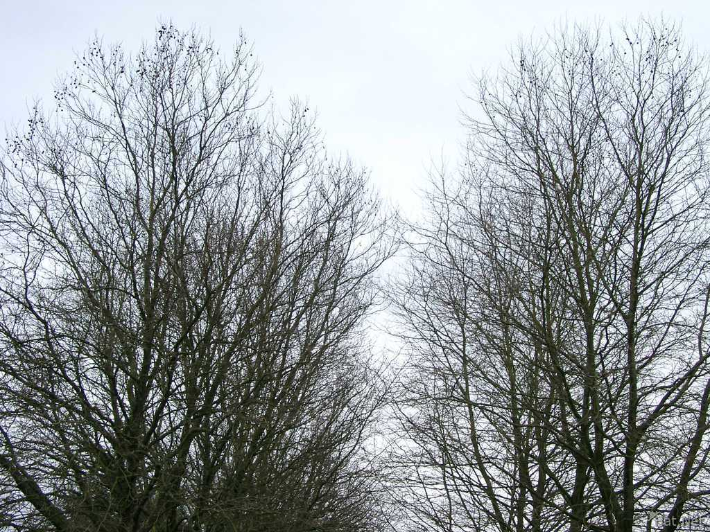 trees in the same area