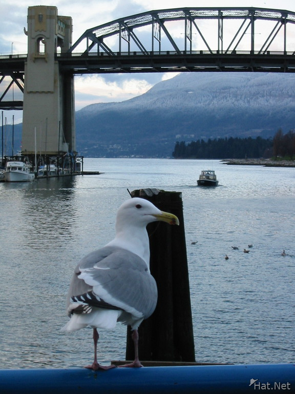 seagull and bridge
