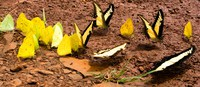 world of butterflies Puerto Igua�u, Salta, Misiones, Salta and Jujuy Province, Argentina, South America