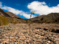 lonesome Purmamarca, Northern Salta Provinces, Argentina, South America