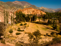 forest of purmarmarca Purmamarca, Tilcara, Jujuy and Salta Provinces, Argentina, South America