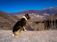 view--gps dog Tilcara, Jujuy and Salta Provinces, Argentina, South America