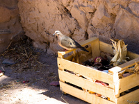 view--box of pigeon Purmamarca, Tilcara, Jujuy and Salta Provinces, Argentina, South America
