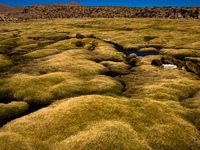 moss lake San Antonio, Potosi Department, Bolivia, South America