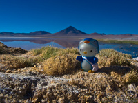 hello kitty in laguna colorada Laguna Colorado, Potosi Department, Bolivia, South America