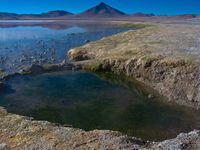 view--pool of laguna colorada Laguna Colorado, Potosi Department, Bolivia, South America