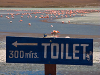 hello kitty toilet in honda lake Laguna Colorado, Potosi Department, Bolivia, South America