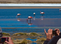 photographing flamingos Laguna Colorado, Potosi Department, Bolivia, South America
