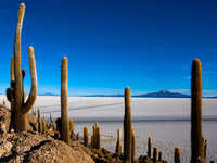 view--cactuses in salar de uyuni Salar de Uyuni, Potosi Department, Bolivia, South America