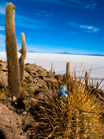 hello kitty in spiky cactus Salar de Uyuni, Potosi Department, Bolivia, South America